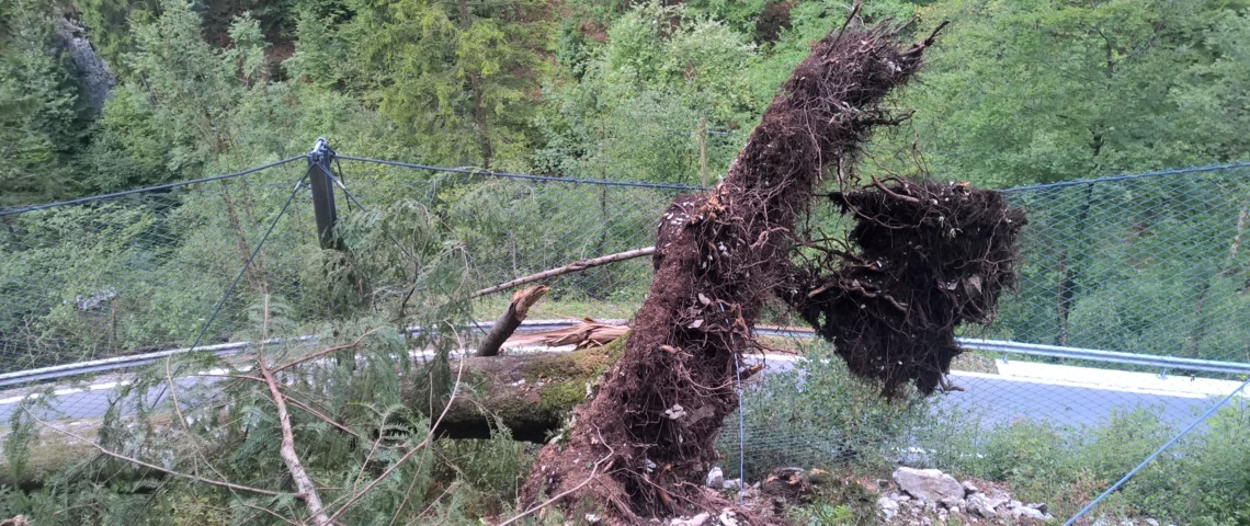 Tree impact - held back by a GBE-1000A rockfall barrier