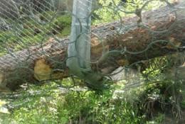 Tree impact