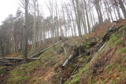 Königstein, Saxony 2012 - Geobrugg