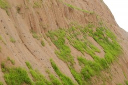 Sierra Flor 2016 - Geobrugg