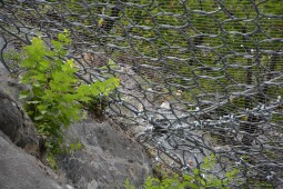 Route Chalais-Vercorin, Valais 2018 - Geobrugg