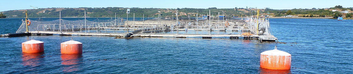 In most regions of the world, one of the greatest challenges for the aquaculture industry is to protect the fish from predators. Our extremely light-weight and long-lasting high-tensile steel wire nets are the perfect solution to this problem.